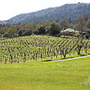California Vineyards In Late Winter Just Before The Bloom 5d22073 Poster