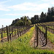 California Vineyards In Late Winter Just Before The Bloom 5d22167 Poster by Wingsdomain Art and Photography