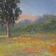 California Wildflowers Poster
