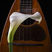 Calla Lily And Mandolin Poster