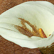 Calla Lily Gold Leaf Poster