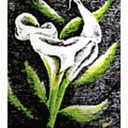 Calla Lily II Poster