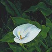 Calla Lily In The Garden Of Diego And Frida Poster