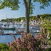 Camden Harbor Spring Poster by Susan Cole Kelly