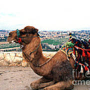 Camel And Jerusalem From Mount Olive Poster by Thomas R Fletcher