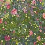 Camellia In Flower Poster