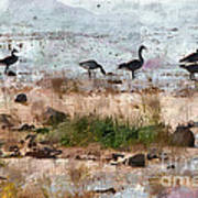 Canada Geese At The Lake Poster