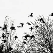 Canada Geese Flight Silhouette Poster