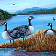 Canada Geese - Lake Lure Poster