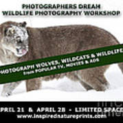 Canadian Wolves Wildcats And Wildlife Photography Workshop Poster