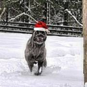 Cane Corso Christmas Poster