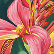 Canna Lily 2 Poster