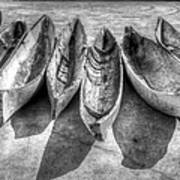 Canoes In Black And White Poster