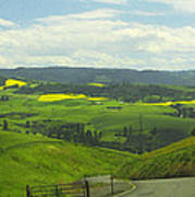 Canola Country Road Poster