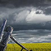 Canola Field In Southern Alberta Poster