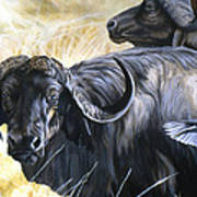 Da206 Cape Buffalo By Daniel Adams Poster