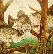 Captivating Crappies Poster by Bruce Bley