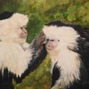 Capuchin Monkeys Charlotte And Samantha Half Proceeds Go To Jungle Friends Primate Sanctuary Poster