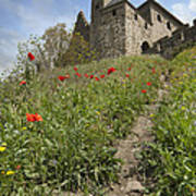 Carcassonne Poppies Poster by Robert Lacy