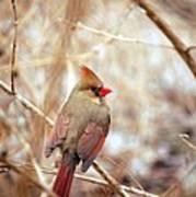 Cardinal Birds Female Poster
