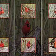 Cardinal Family Poster