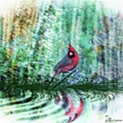 Cardinal - Featured In Comfortable Art-wildlife-and Nature Wildlife Groups Poster
