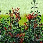 Cardinal Flowers Poster
