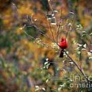 Cardinal In Autumn Poster