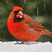 Cardinal In The Snowstorm Poster