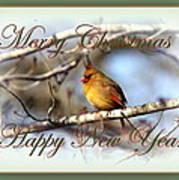 Cardinal - Lady At Christmas Poster