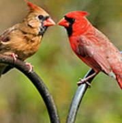 Cardinal Love Poster