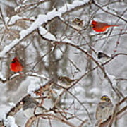 Cardinal Meeting In The Snow Poster