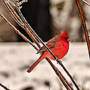 Cardinal On A Winter Day II Poster