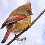 Cardinal On An Icy Twig - Digital Paint Poster