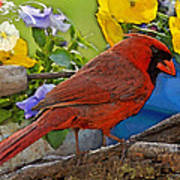 Cardinal With Pansies And Decorations Photoart Poster