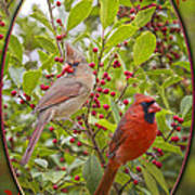 Cardinals In Holly Poster
