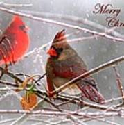 Cardinals - Male And Female - Img_003card Poster