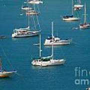 Caribbean Sailboats Poster by Amy Cicconi