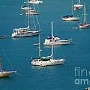 Caribbean Sailboats Poster