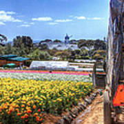 Carlsbad Flower Fields Poster