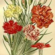 Carnations Poster by Philip Ralley