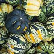 Carnival Winter Squash At The Market Poster