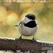 Carolina Chickadee With Decorative Frame IIi Poster