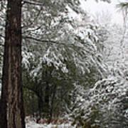 Carolina Snowfall Poster