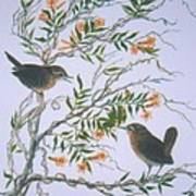 Carolina Wren And Jasmine Poster