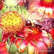 Carpenter Bee No. 4 Poster