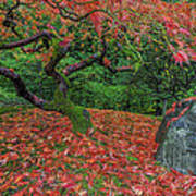 Carpet Of Fall Colors In Portland Japanese Garden Poster