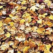 Carpet Of Leafs Poster