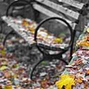 Carpet Of Leaves Poster