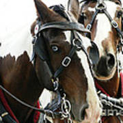 Carriage Horse - 2 Poster
